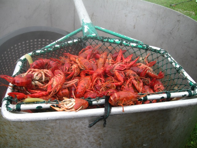 Crawfish and Seafood Boils