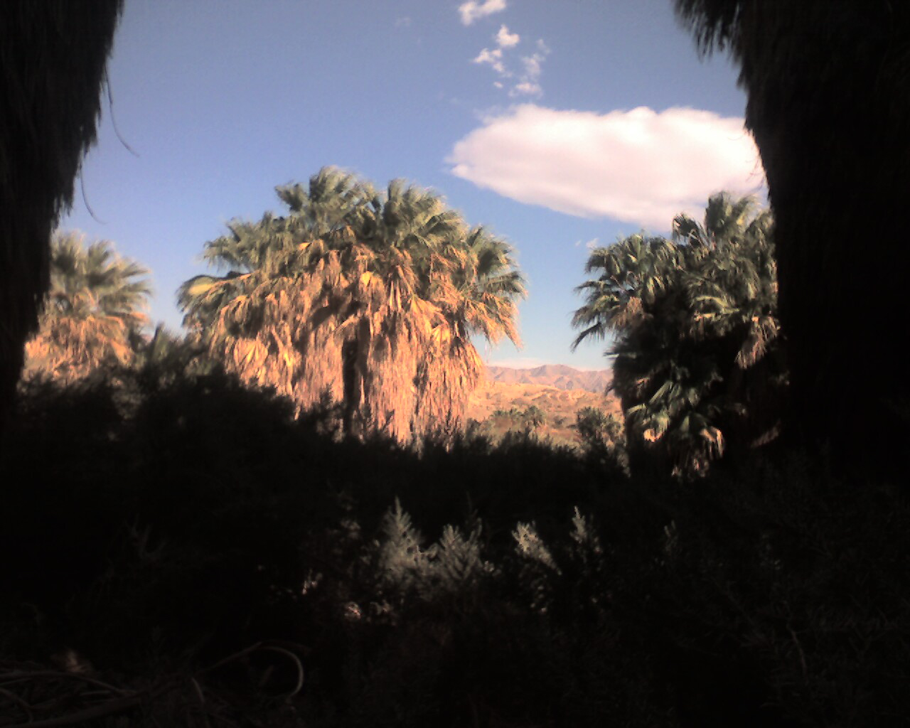 thousand palms lesbian personals Florida alternative lifestyle campgrounds  just as most alternative lifestyle camps will be open to gays and lesbians  the thousand palms rv resort in.